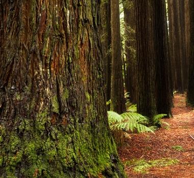 Victorian Trees