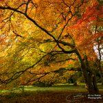 Westonbirt Arboretum, England